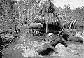 Animais em Terreno Inundado Pelo Rio Madeira - 913, Acervo do Museu Paulista da USP (cropped).jpg