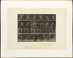 Animal locomotion. Plate 361 (Boston Public Library).jpg