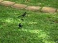 Animali al Pascolo - panoramio.jpg