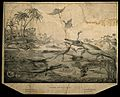 Animals and plants of Dorset in the Liassic period. Wellcome V0001517.jpg
