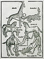 Animals seen by the author during his journey to the Holy Land - Breydenbach Bernhard Von - 1502.jpg