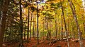 Arethusa Falls Trail, Hart's Location - panoramio (4).jpg