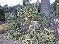 Arizona Cactus Garden 061.JPG