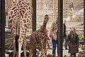 Artis Little Nzuri (7 days old) curious about her public (12994901144).jpg
