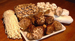Asian mushrooms, clockwise from left, enokitake, buna-shimeji, bunapi-shimeji, king oyster mushroom and shiitake.
