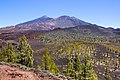At Teide National Park 2019 063.jpg