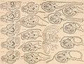 Atlas d'embryologie (1889) (20349793181).jpg
