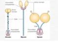 Aufbau der Motorproteine.png