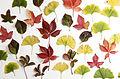 Autumn Studio Colour (4035688996).jpg