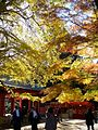 Autumn colors,katori-jingu-shrine,katori-city,japan.JPG