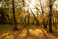Autumn in Volgograd Oblast 005.jpg