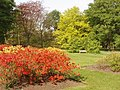 Azaleas at Kew Gardens - geograph.org.uk - 423513.jpg