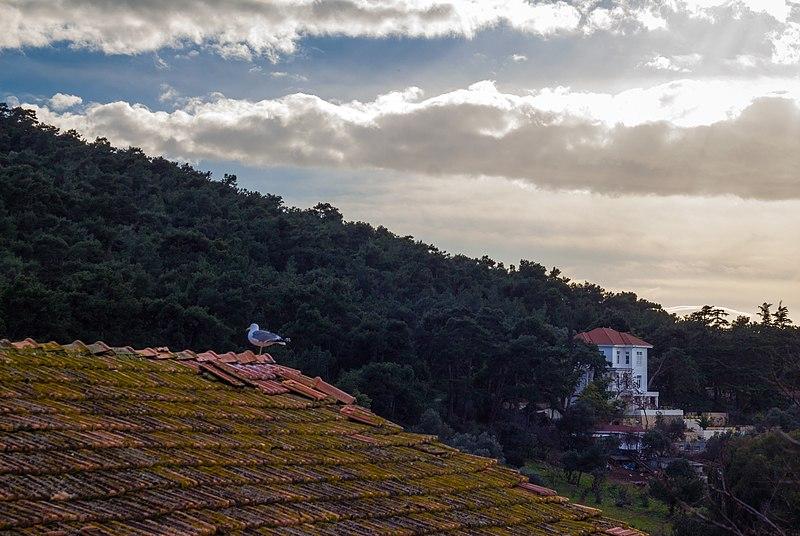 File:Büyükada - panoramio (2).jpg