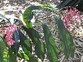 BCBG Flowers 10.JPG