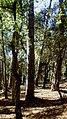 BOSC (BARRI MONTILIVI-PALAU) GIRONA - panoramio.jpg
