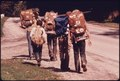 BOY SCOUTS HIKING THE CUYAHOGA TRAIL WHICH TAKES THEM ALONG THE EDGE OF BOLANZ AND AKRON-PENINSULA ROADS IN... - NARA - 558090.tif
