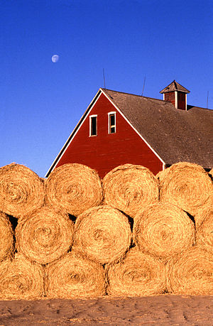 Straw bales in front of a small farm near Ames...