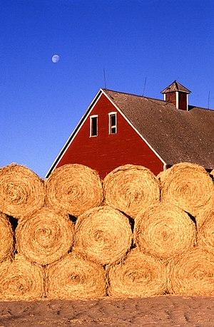 Story County, Iowa - Bales of hay on a farm near Ames, Story County, Iowa