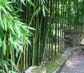 Bambouseraie.JPG