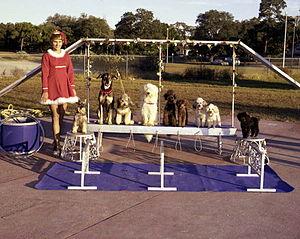 Sarasota High School - Dog act in the Sailor Circus, 1977.