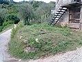 Barga, Province of Lucca, Italy - panoramio - jim walton (42).jpg
