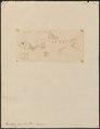 Barilius cocsa - 1807-1822 - Print - Iconographia Zoologica - Special Collections University of Amsterdam - UBA01 IZ15000120.tif
