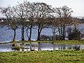 Bartin's Bay at Lough Neagh - geograph.org.uk - 680454.jpg