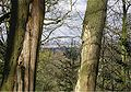 Battersea Power Station seen from Dulwich Wood in the early spring.jpg