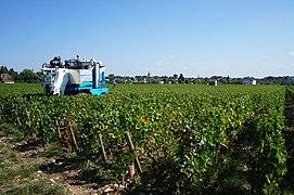Beaune.- les vignobles de la côte de Beaune (1).JPG