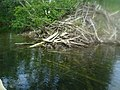 Beaver Hut With Turtles On It (8456864612).jpg