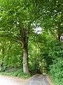 Bedburg-Hau Moyländer Allee 2-4 LSG Moyländer Wald PM18-16.jpg
