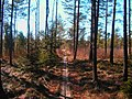 Beginning of a path - panoramio.jpg