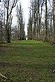 Bellmount Plantation - geograph.org.uk - 362064.jpg