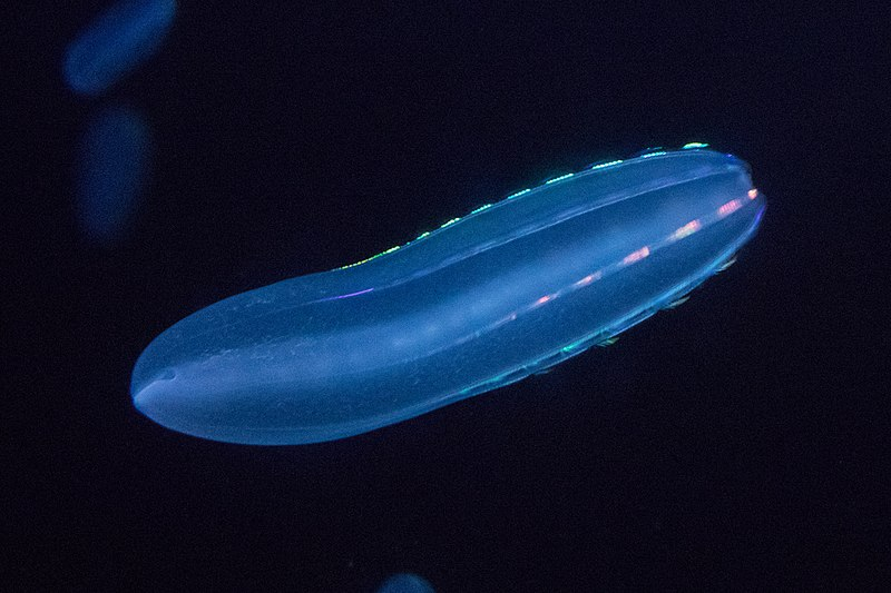 Underwater image of a floating blob lit up against a dark background.