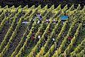 Beste Weinlagen an der Mosel. 04.jpg