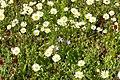 Bienenwiese Obermenzing - bee meadow 05.jpg