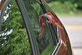 Bird and reflection, automobile window.jpg
