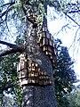 Birdhouses r2.jpg