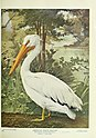Birds and nature (1901) (14748216032).jpg