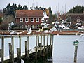 Birds at Bosham - geograph.org.uk - 1739711.jpg