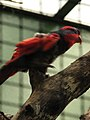 Birds have pretty much the best colors of any animals (540041976).jpg