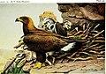 Birds of New York (1914) (14568806698).jpg
