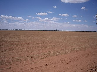 Birrego, New South Wales - Birrego wheat country