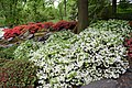 Blüten im Japanischen Garten - Egapark.jpg