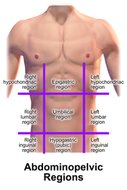 Quadrants And Regions Of Abdomen Wikipedia