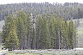 Blue heron rookery along the Yellowstone River (48350249101).jpg