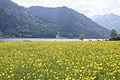 Blumenwiese am Achensee.jpg