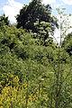 Bobbingworth, Essex, England - field off Gainsthorpe Road 04.JPG