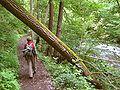 Bodetal Wanderweg.jpg