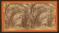 Bonaventure Cemetery near Savannah, from Robert N. Dennis collection of stereoscopic views 3.png